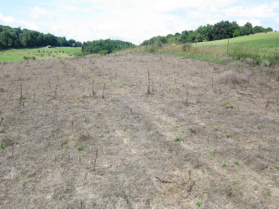 Burnt Hill Switchgrass Planting