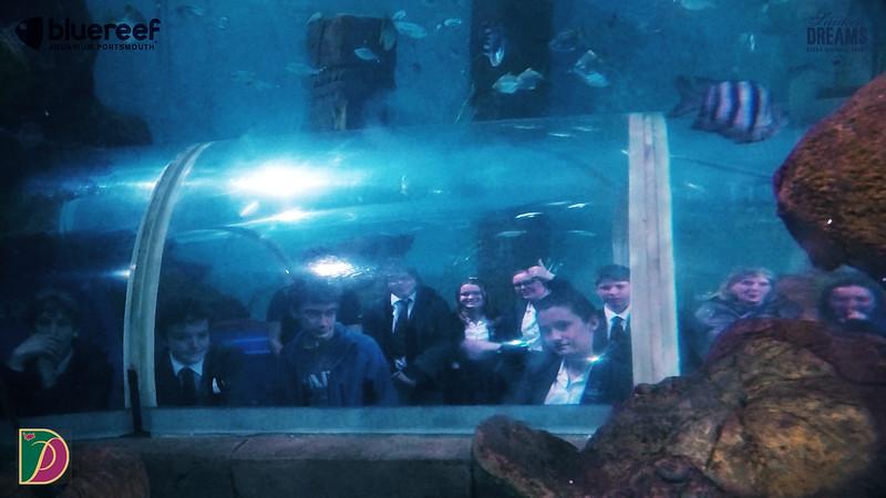 Blue Reef.00_22_19_00.Still035.jpg