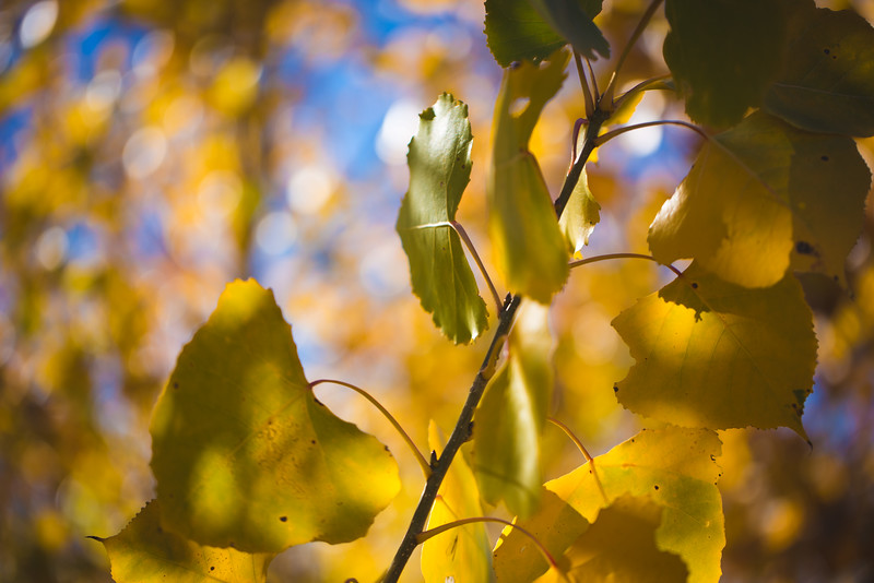 20151024-Fall Colors-101.jpg