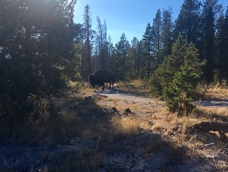 Ran into a bison while jogging around