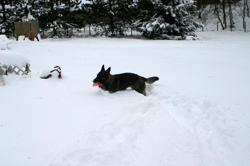 2009.12.9 Blizzard Brita yard (18).JPG