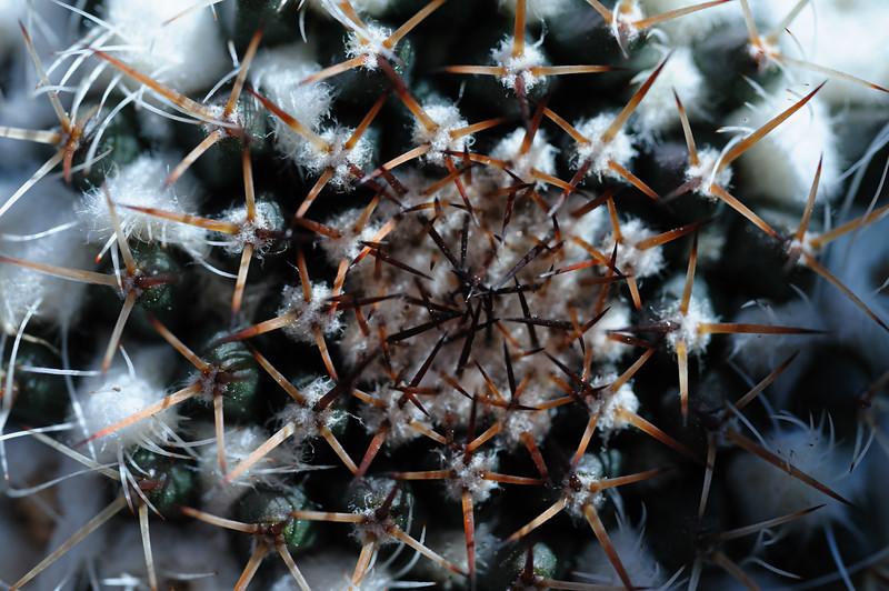 cactus spikes 030820-1711.jpg