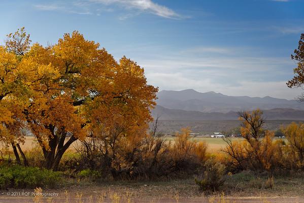 Bosque del Apache - November 2011