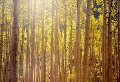 Aspen & Glenwood Springs 2009
