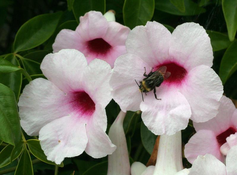 3652 Flowers & Bee.jpg