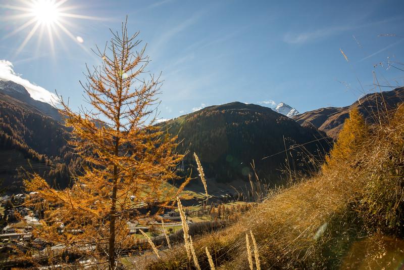Herbst-im-Rheinwald--12.jpg