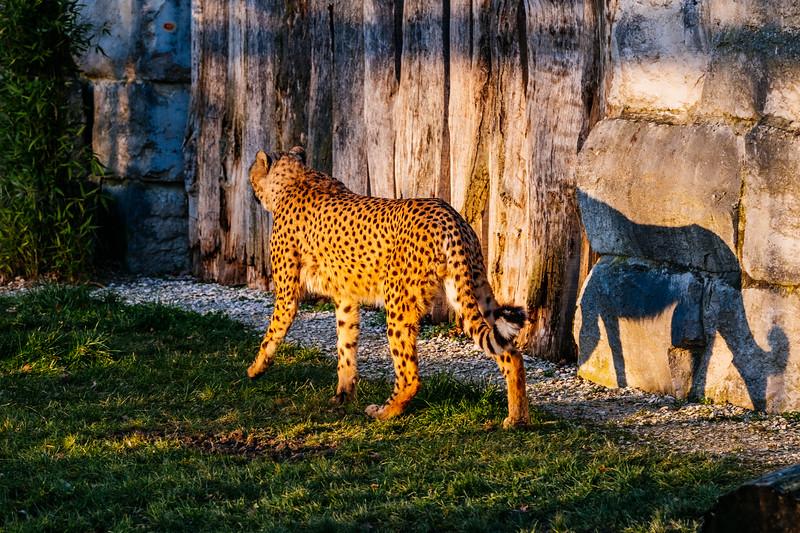 Tonis Zoo-0280.jpg