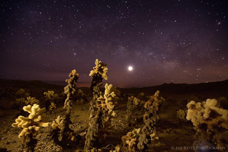 Cactus Galacticus