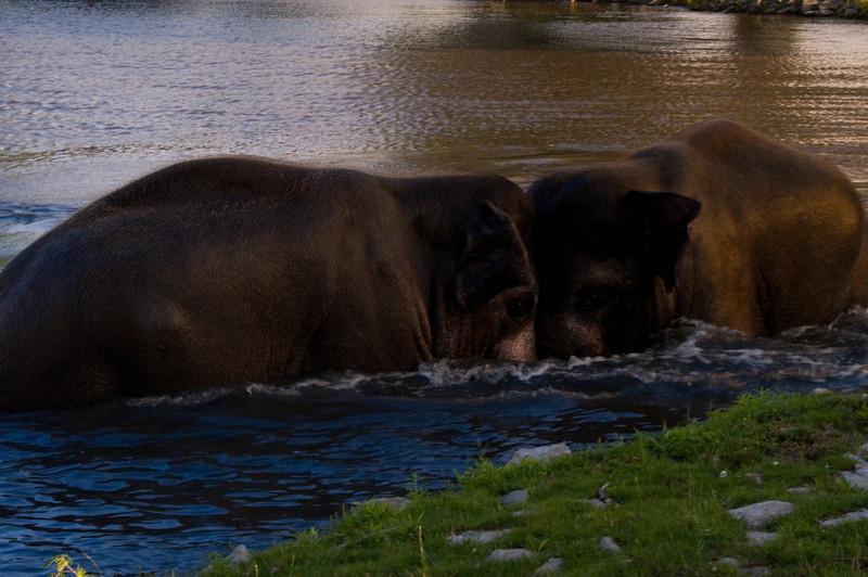 african safari Park-Canada-31.jpg
