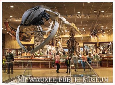 The Milwaukee Public Museum Trip