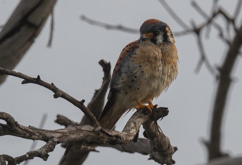 HNBH Birds4-3.jpg