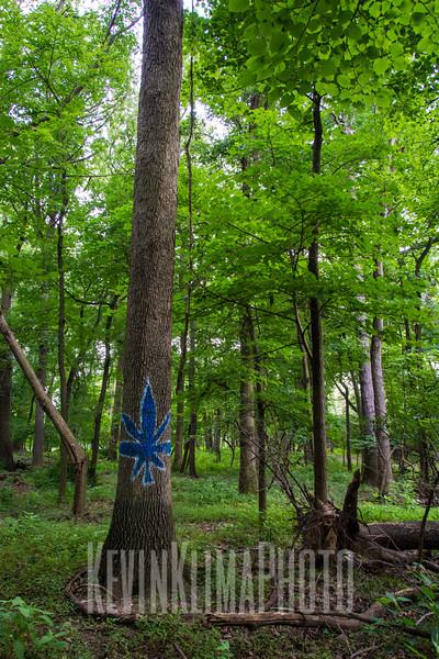 weedtreeforest2.jpg