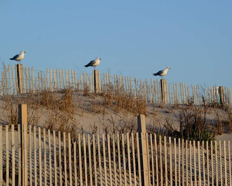 Three gulls 04_30_18.JPG