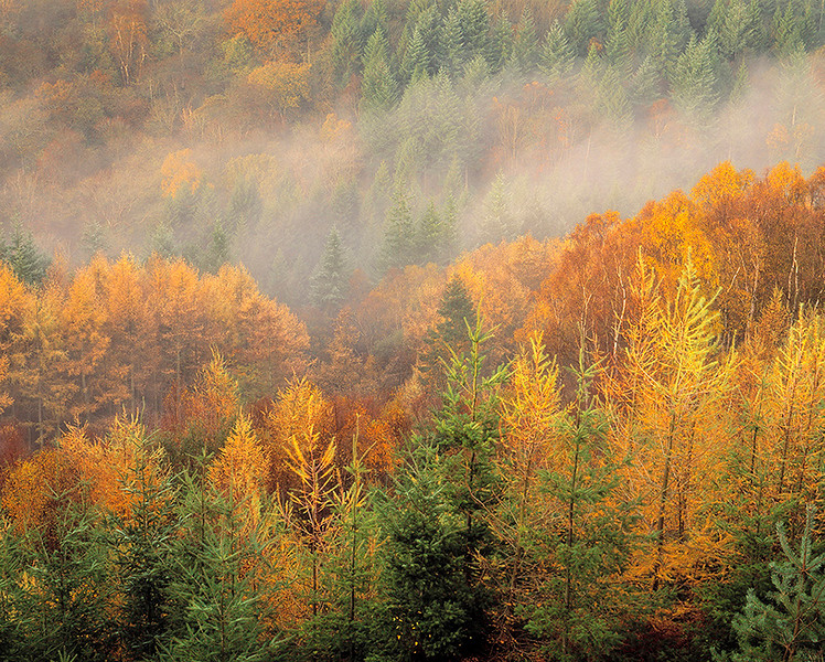 depths of autumn, Langdale Forest, North Yorkshire, England