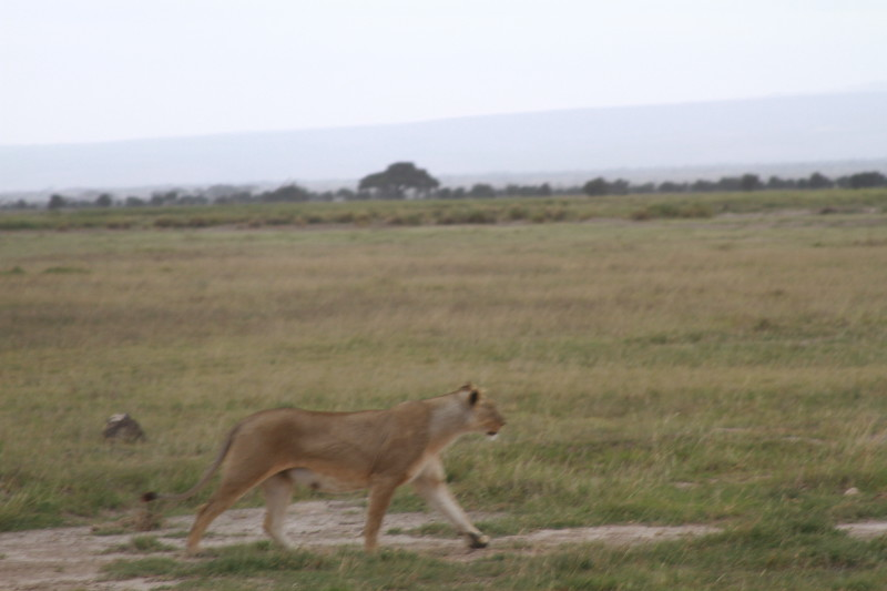 Kenya 2019 #2 1421.JPG