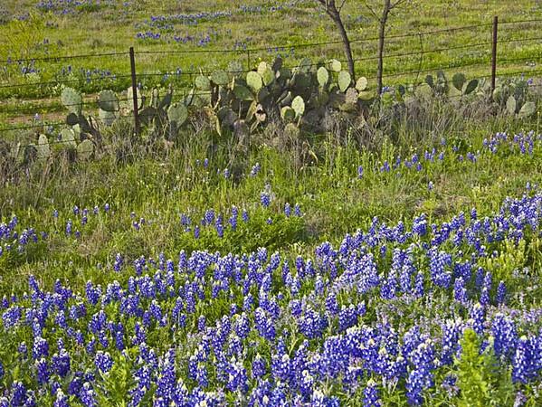Wldflwrs-Rt-29-and-cactus.jpg