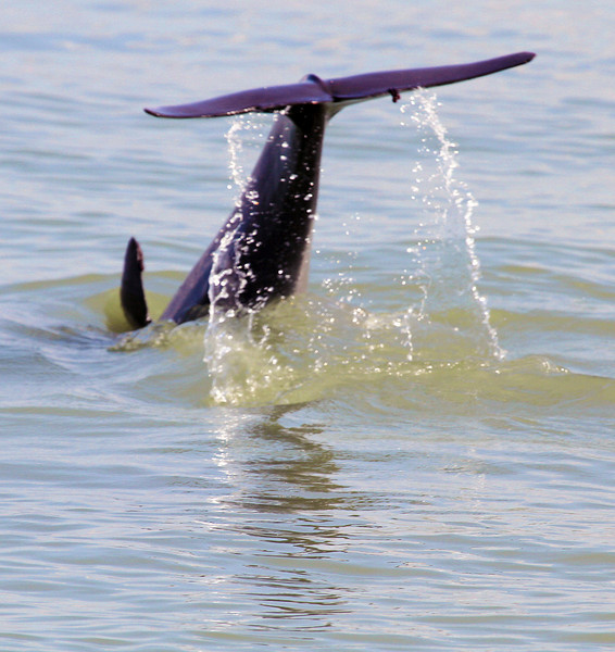 dolphinbreaching.jpg