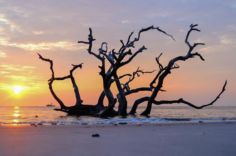 Sunrise Over Driftwood Deach