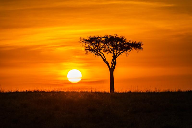 Morning in Kenya