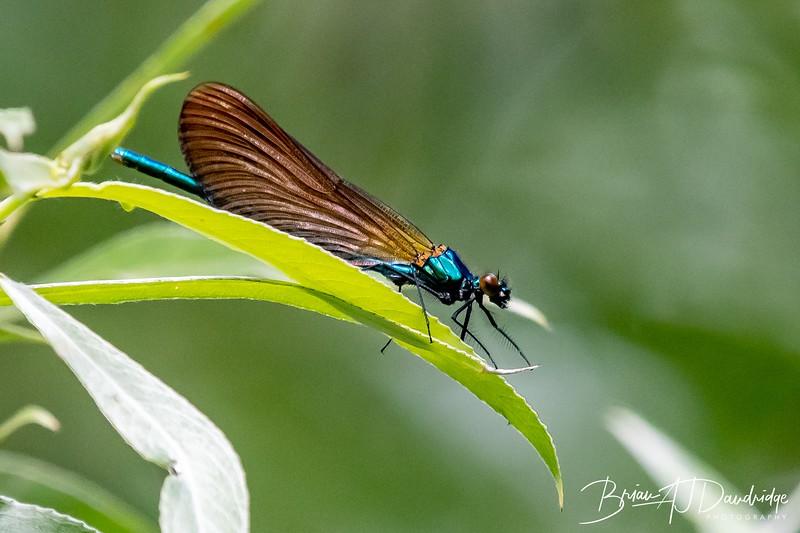 Woods Mill Dragonflies and Butterflies-6603.jpg