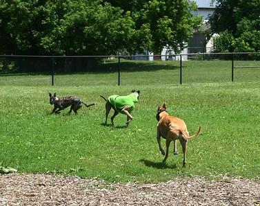 RVing 2014 Acton Ontario Dog Park