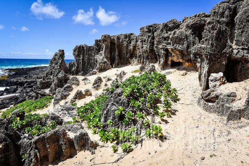 Kauai2017-299.jpg
