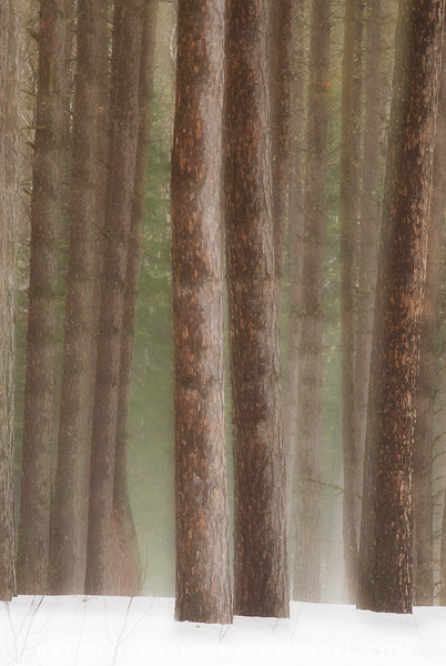 Dreamy Forest 2