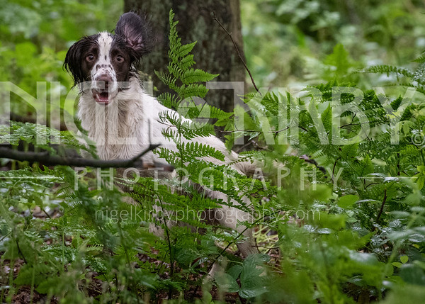 Training Day - Wed 12 June 2019 - Spaniels
