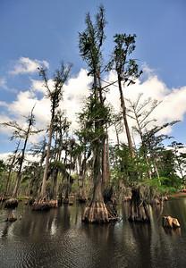 Louisiana Parks