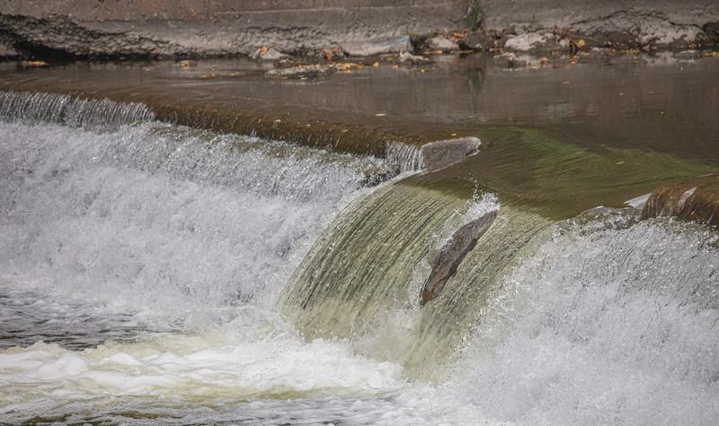 salmon upstream (14 of 48).jpg