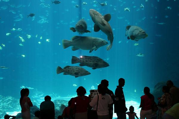 Georgia Aquarium, Atlanta, GA