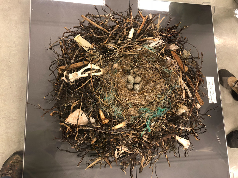 Raven's nest. Note the big chunks of things in there, including bones and rakes and stuff.