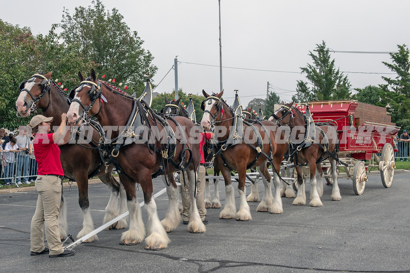 Clydesdales Come to Patchogue 2018