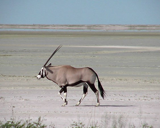 Other Wildlife, Etosha National Park, Namibia