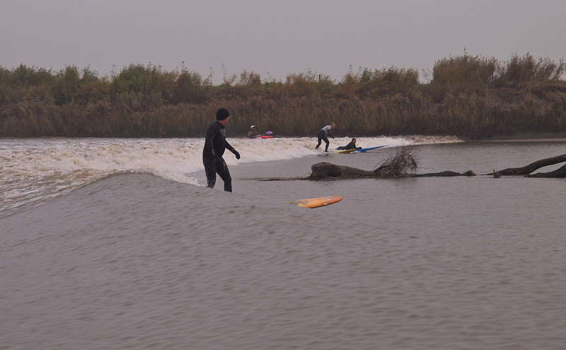 Hazards of river bore surfing include dodging trees!