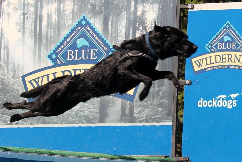 Dock Dogs at Fair-132.JPG