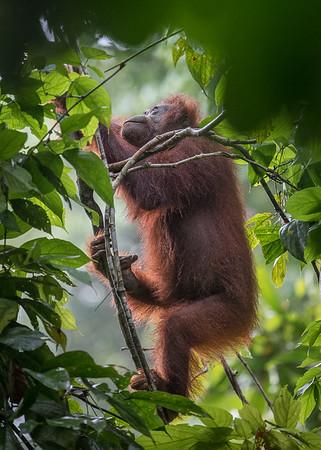 Monkeys (Primates)