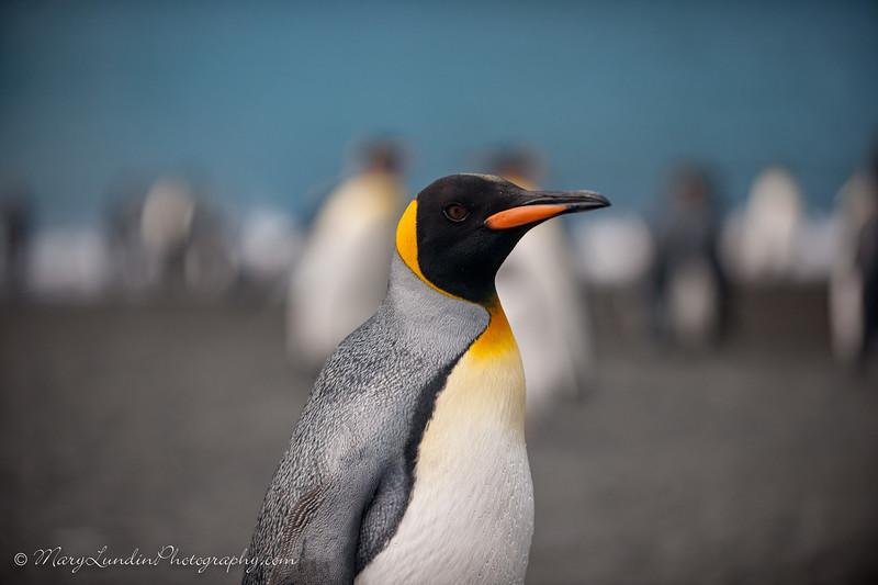 Antarctic-93