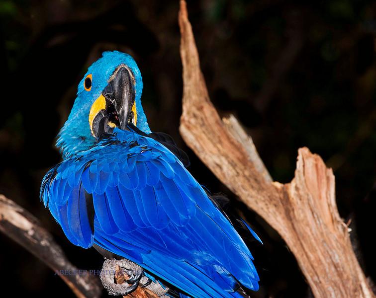 Framed parrot.jpg