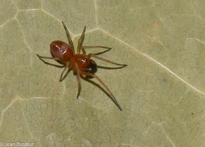 Voyage en Gaspesie , araignees