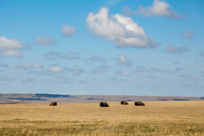 Day 9 - Grasslands NP - Sask-2.jpg