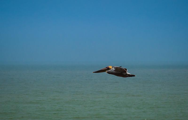 Galveston 21520-1595.jpg