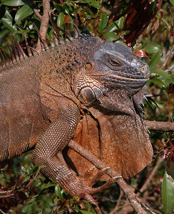 Costa Rica 2004