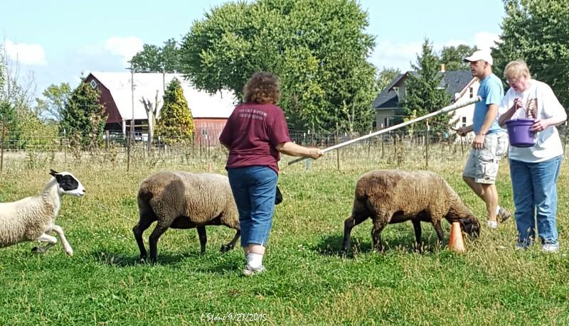 2015.9.27 Herding at Bonnies (15).jpg