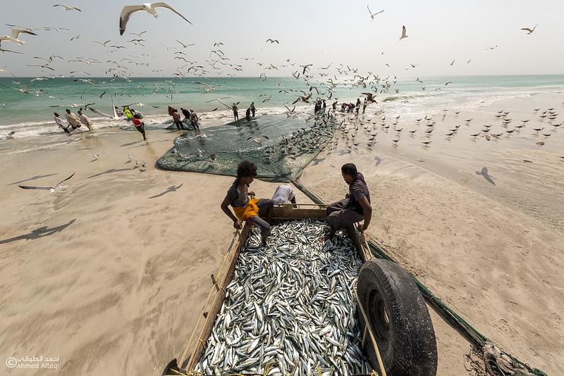 Sardine Season (75)- Dhofar.jpg