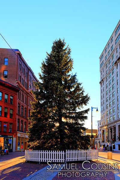 Portland's Christmas tree
