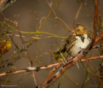 Bob Jones Nature Preserve - Quail Creek