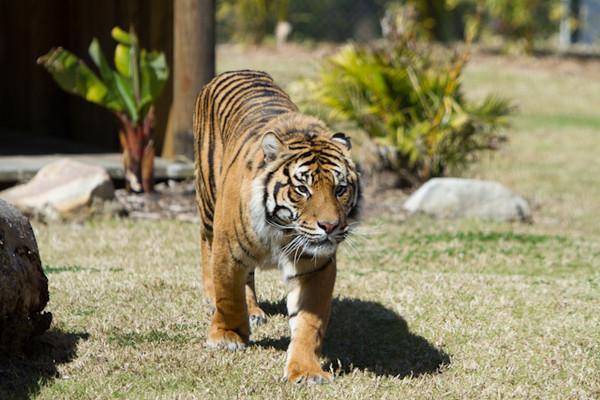 Symbio Wildlife Park - 02SEP12