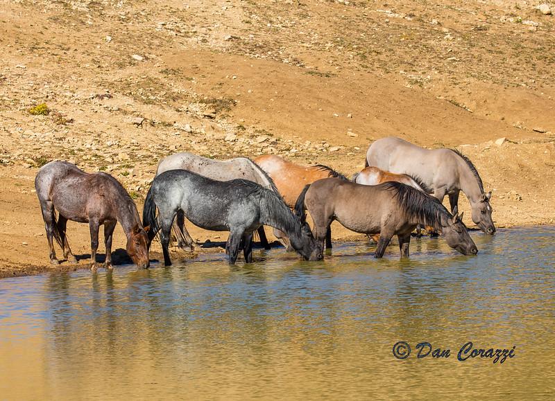 Watering Mustangs EEE-1-2.jpg