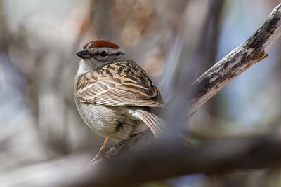 Bird galleries